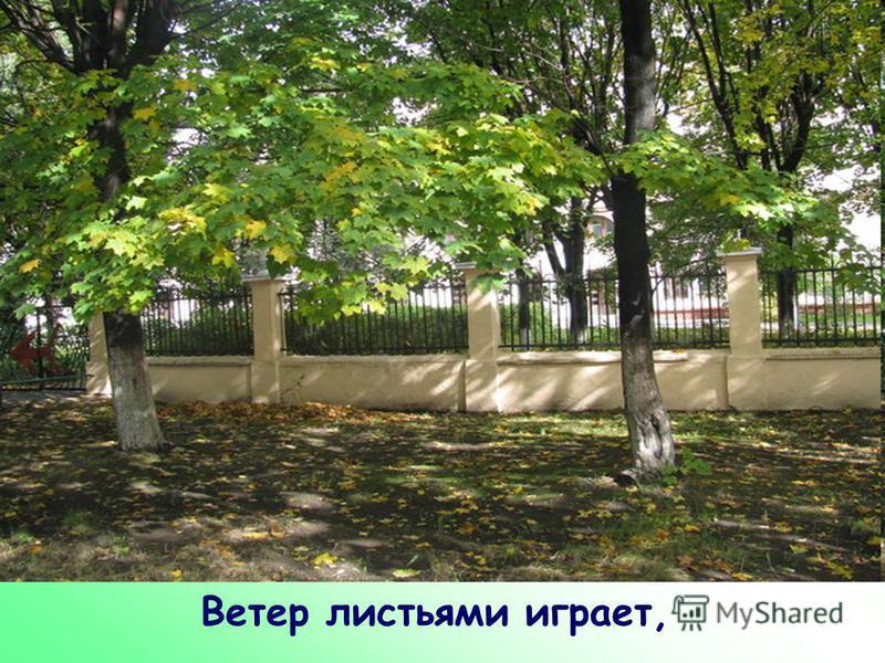 Ветер листьями играет,