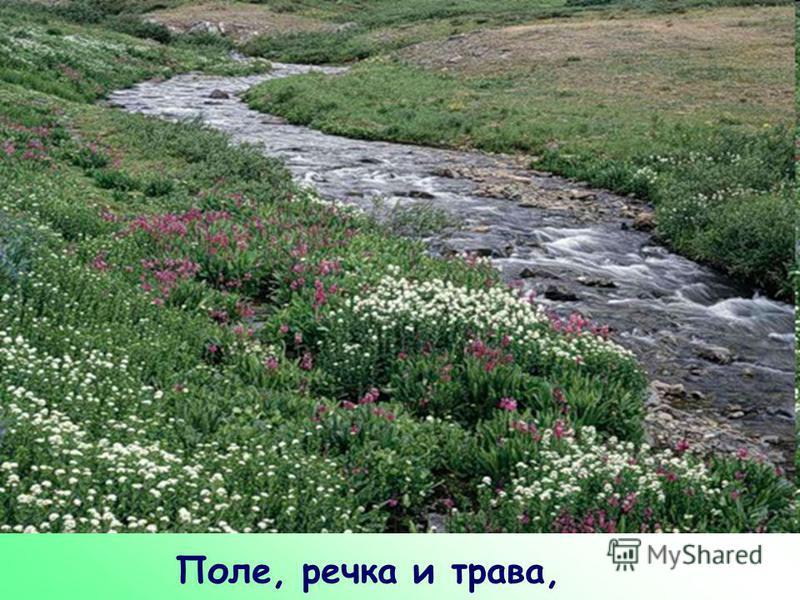 Поле, речка и трава,