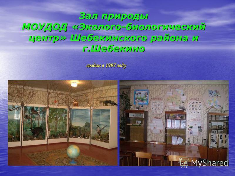 Зал природы МОУДОД «Эколого-биологический центр» Шебекинского района и г.Шебекино создан в 1997 году создан в 1997 году
