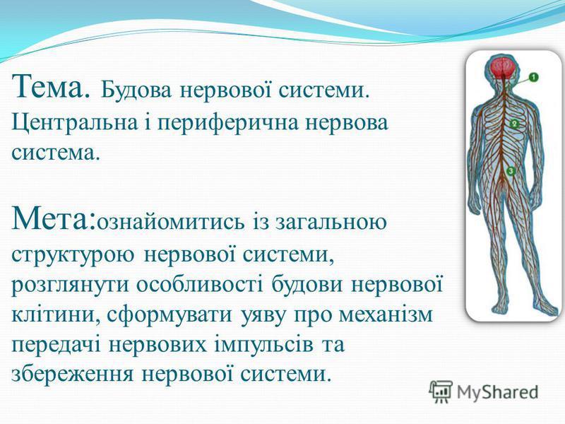 Тема. Будова нервової системи. Центральна і периферична нервова система. Мета: ознайомитись із загальною структурою нервової системи, розглянути особливості будови нервової клітини, сформувати уяву про механізм передачі нервових імпульсів та збережен