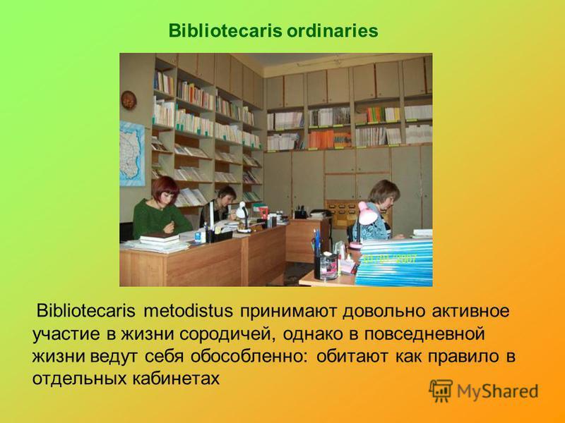 Bibliotecaris ordinaries Bibliotecaris metodistus принимают довольно активное участие в жизни сородичей, однако в повседневной жизни ведут себя обособленно: обитают как правило в отдельных кабинетах