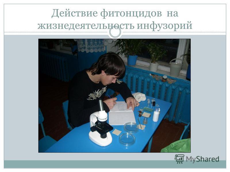 Действие фитонцидов на жизнедеятельность инфузорий
