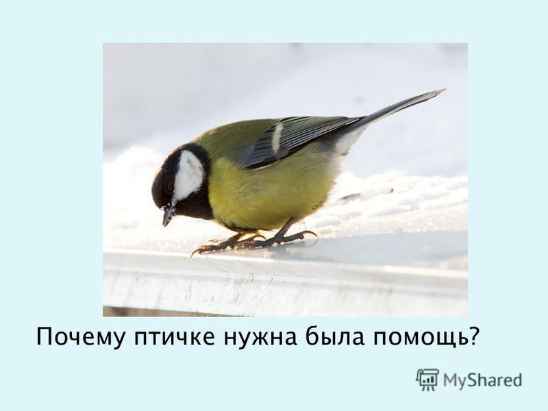 Почему птичке нужна была помощь?