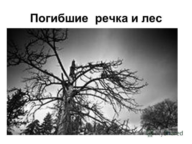Погибшие речка и лес
