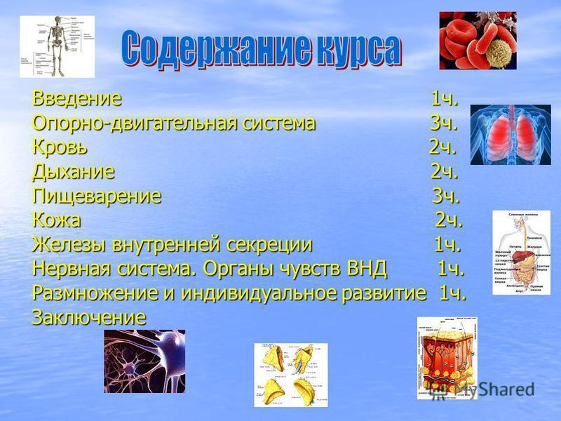 Введение 1 ч. Опорно-двигательная система 3 ч. Кровь 2 ч. Дыхание 2 ч. Пищеварение 3 ч. Кожа 2 ч. Железы внутренней секреции 1 ч. Нервная система. Органы чувств ВНД 1 ч. Размножение и индивидуальное развитие 1 ч. Заключение