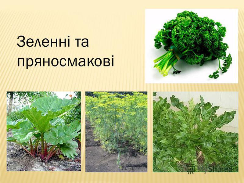 Зеленні та пряносмакові