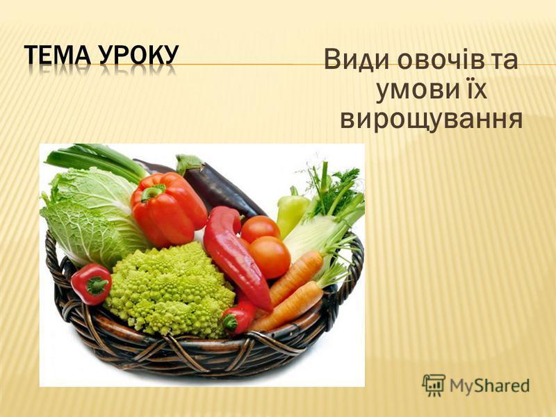 Види овочів та умови їх вирощування