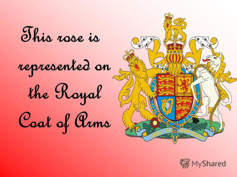 This rose is represented on the Royal Coat of Arms