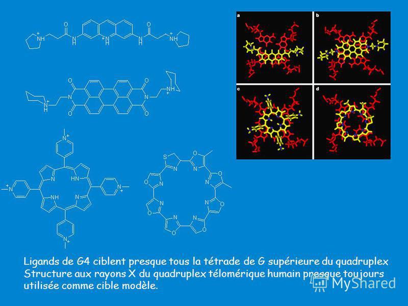 Ligands de G4 ciblent presque tous la tétrade de G supérieure du quadruplex Structure aux rayons X du quadruplex télomérique humain presque toujours utilisée comme cible modèle.