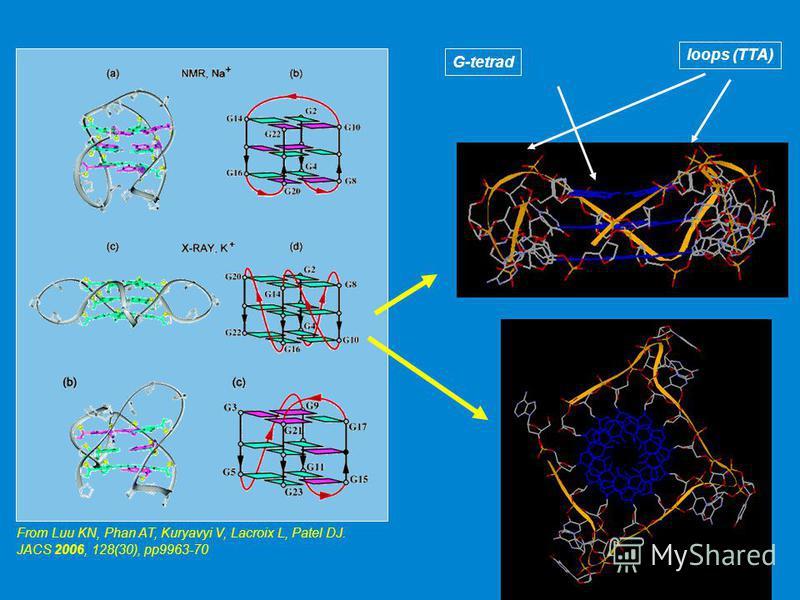 From Luu KN, Phan AT, Kuryavyi V, Lacroix L, Patel DJ. JACS 2006, 128(30), pp9963-70 G-tetradloops (TTA)