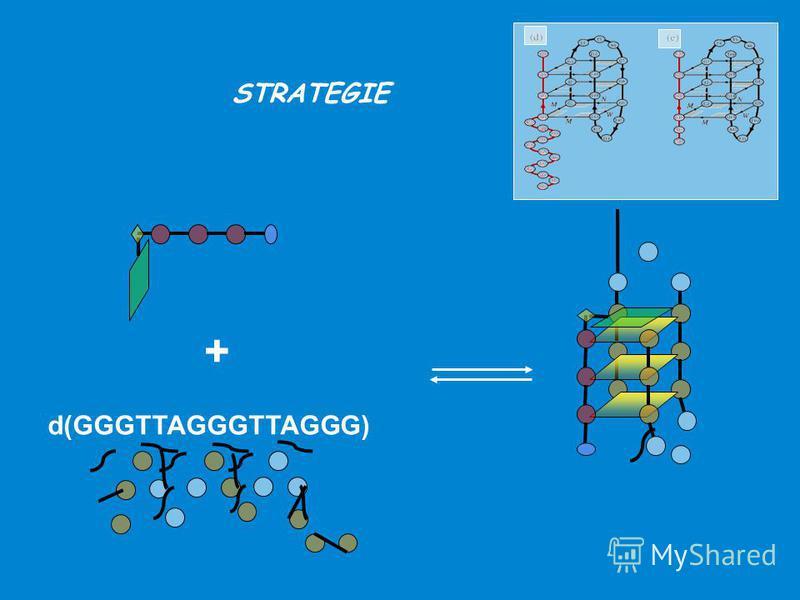STRATEGIE + d(GGGTTAGGGTTAGGG)