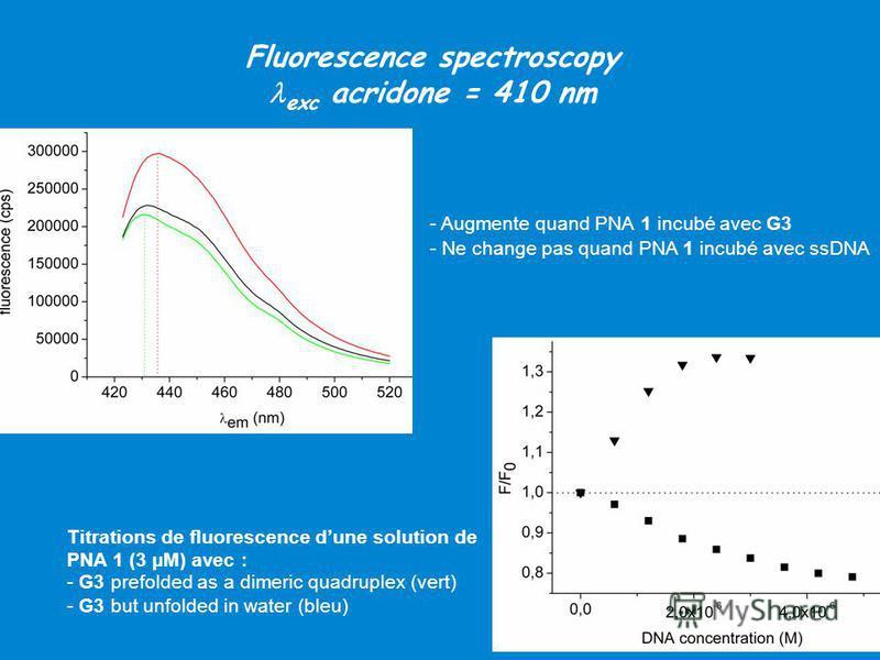 - Augmente quand PNA 1 incubé avec G3 - Ne change pas quand PNA 1 incubé avec ssDNA Titrations de fluorescence dune solution de PNA 1 (3 µM) avec : - G3 prefolded as a dimeric quadruplex (vert) - G3 but unfolded in water (bleu) Fluorescence spectrosc