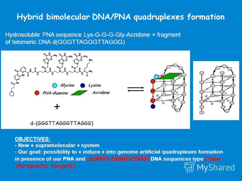 Hybrid bimolecular DNA/PNA quadruplexes formation Hydrosoluble PNA sequence Lys-G-G-G-Gly-Acridone + fragment of telomeric DNA d(GGGTTAGGGTTAGGG) OBJECTIVES: - New « supramolecular » system - Our goal: possibility to « induce » into genome artificial