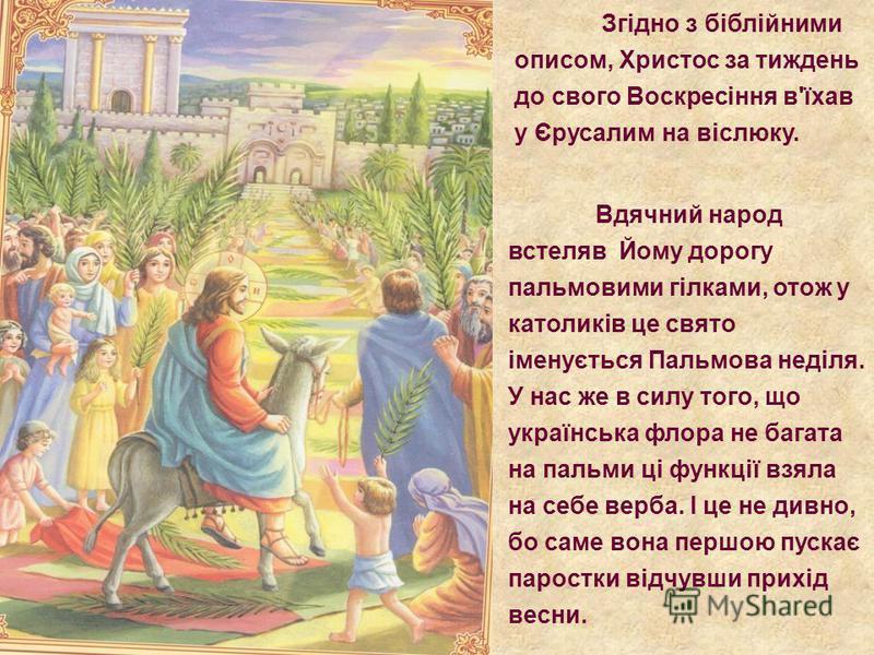 Згідно з біблійними описом, Христос за тиждень до свого Воскресіння в'їхав у Єрусалим на віслюку. Вдячний народ встеляв Йому дорогу пальмовими гілками, отож у католиків це свято іменується Пальмова неділя. У нас же в силу того, що українська флора не
