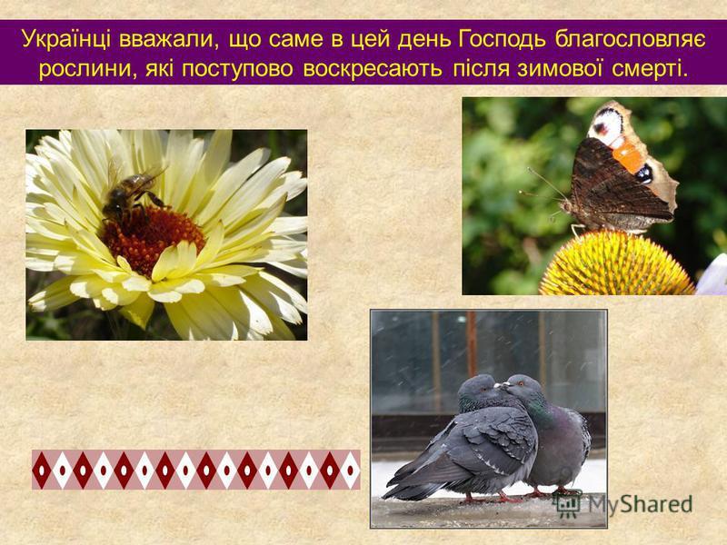 Українці вважали, що саме в цей день Господь благословляє рослини, які поступово воскресають після зимової смерті.