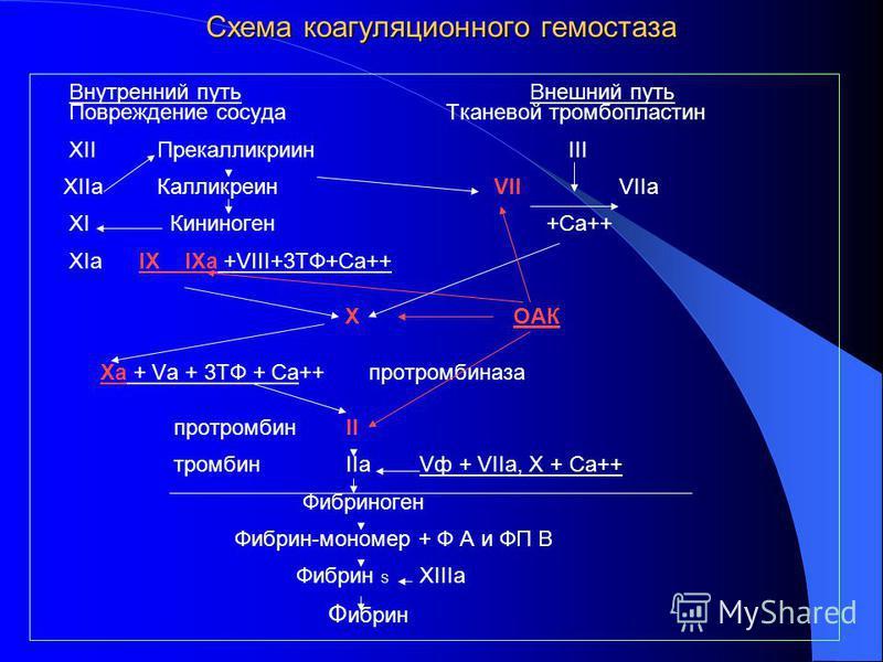 Схема коагуляционного гемостаза Внутренний путь Внешний путь Повреждение сосуда Тканевой тромбопластин XII Прекалликриин III XIIa Калликреин VII VIIa XI Кининоген +Са++ XIa IX IХa +VIII+3ТФ+Са++ X ОАК Ха + Vа + 3ТФ + Са++ протромбиназа протромбин II