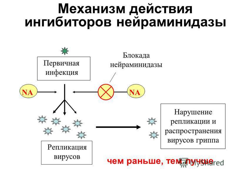 Механизм действия ингибиторов нейраминидазы Первичная инфекция Репликация вирусов Блокада нейраминидазы Нарушение репликации и распространения вирусов гриппа NА чем раньше, тем лучше NА