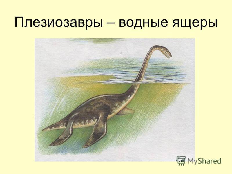 Плезиозавры – водные ящеры