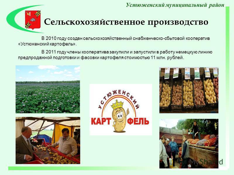 В 2010 году создан сельскохозяйственный снабженческо-сбытовой кооператив «Устюженский картофель». В 2011 году члены кооператива закупили и запустили в работу немецкую линию предпродажной подготовки и фасовки картофеля стоимостью 11 млн. рублей. Сельс