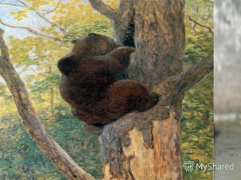 Що їсть ведмідь? Він їсть комах та їх личинки, черв'яків, жаб, ящірок, рибу, мурашок, а також ягоди, горіхи, кореневища, траву, молоді гілки і листя та дуже любить мед.