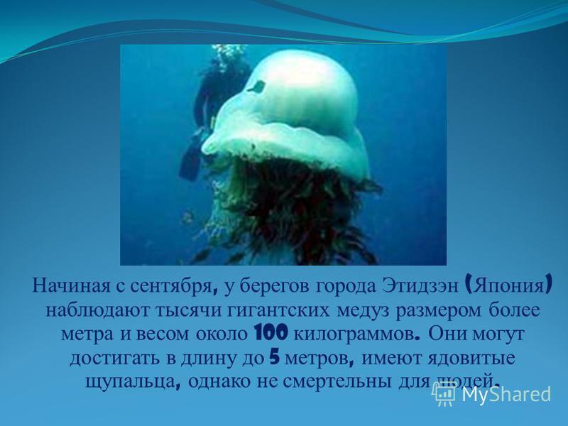 Начиная с сентября, у берегов города Этидзэн ( Япония ) наблюдают тысячи гигантских медуз размером более метра и весом около 100 килограммов. Они могут достигать в длину до 5 метров, имеют ядовитые щупальца, однако не смертельны для людей.