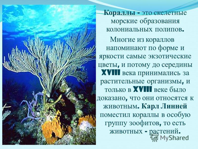 Кораллы - это скелетные морские образования колониальных полипов. Многие из кораллов напоминают по форме и яркости самые экзотические цветы, и потому до середины XVIII века принимались за растительные организмы, и только в XVIII веке было доказано, ч
