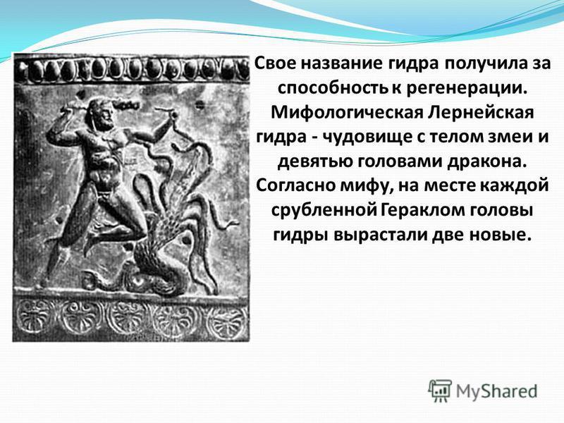 Свое название гидра получила за способность к регенерации. Мифологическая Лернейская гидра - чудовище с телом змеи и девятью головами дракона. Согласно мифу, на месте каждой срубленной Гераклом головы гидры вырастали две новые.