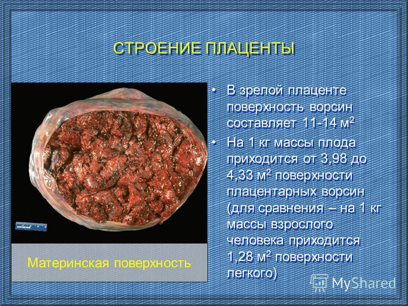 В зрелой плаценте поверхность ворсин составляет 11-14 м 2 На 1 кг массы плода приходится от 3,98 до 4,33 м 2 поверхности плацентарных ворсин (для сравнения – на 1 кг массы взрослого человека приходится 1,28 м 2 поверхности легкого) В зрелой плаценте