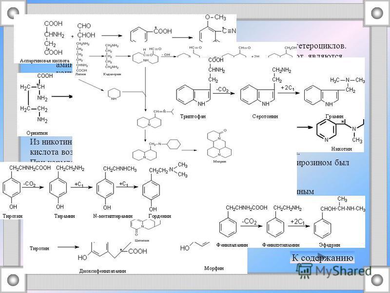 Процессы биосинтеза алкалоидов В основе биосинтеза алкалоидов лежит образование соответствующих гетероциклов. Исходными веществами для образования гетероциклов, содержащих азот, являются аминокислоты или продукты их декарбоксилирования - амины. Приве