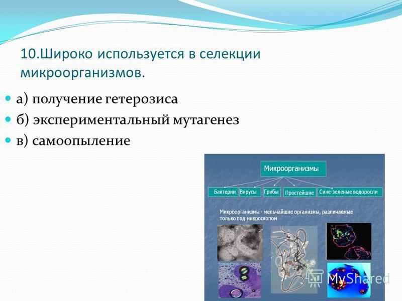 10. Широко используется в селекции микроорганизмов. а) получение гетерозиса б) экспериментальный мутагенез в) самоопыление