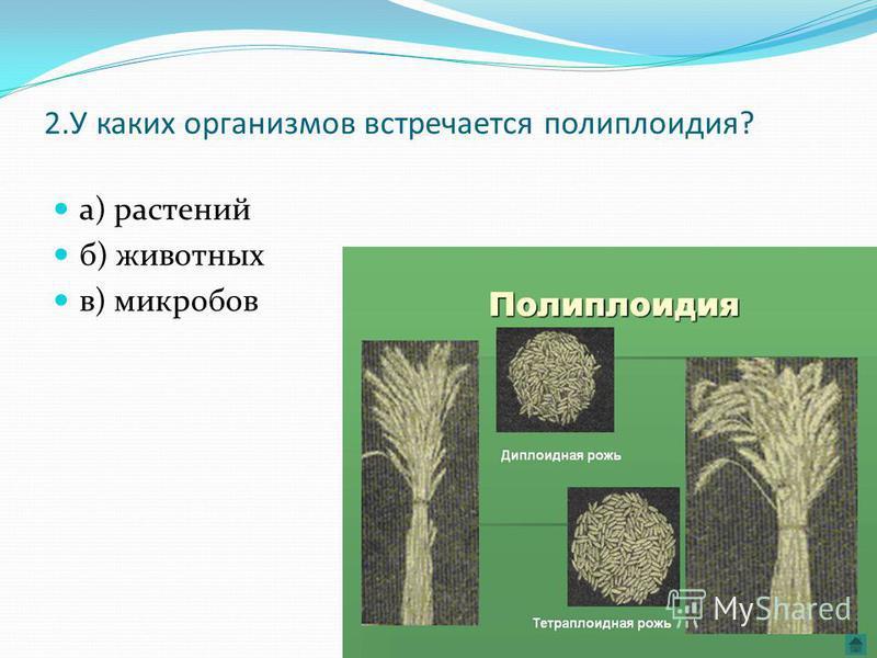 2. У каких организмов встречается полиплоидия? а) растений б) животных в) микробов