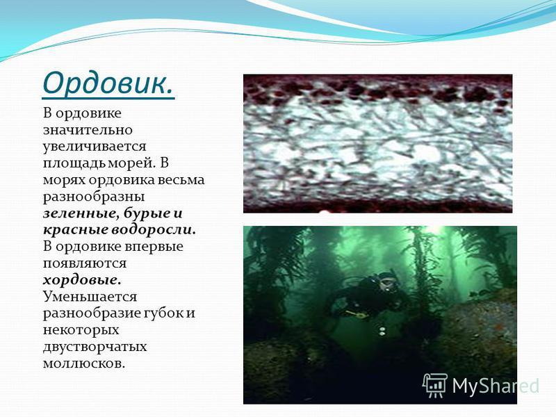 Ордовик. В ордовике значительно увеличивается площадь морей. В морях ордовика весьма разнообразны зеленные, бурые и красные водоросли. В ордовике впервые появляются хордовые. Уменьшается разнообразие губок и некоторых двустворчатых моллюсков.