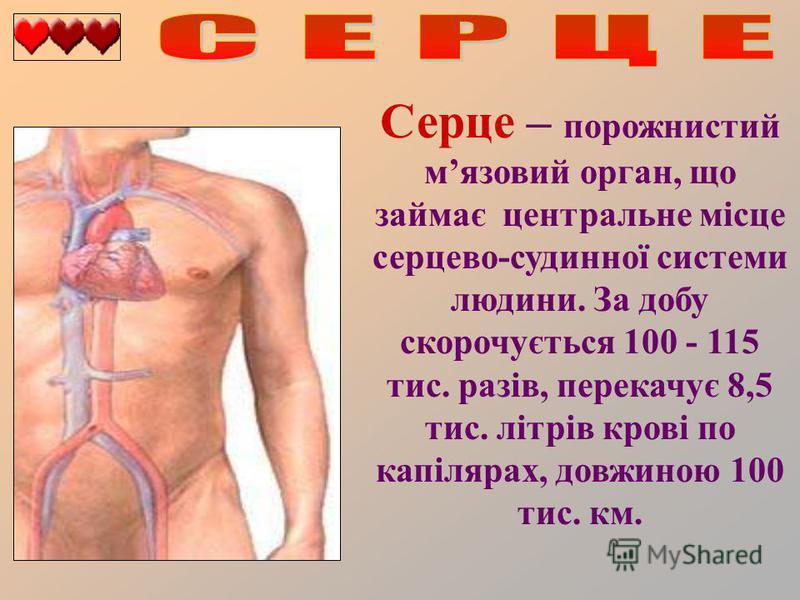 Серце – порожнистий мязовий орган, що займає центральне місце серцево-судинної системи людини. За добу скорочується 100 - 115 тис. разів, перекачує 8,5 тис. літрів крові по капілярах, довжиною 100 тис. км.