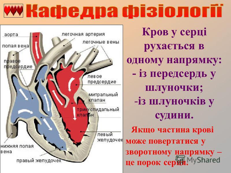Кров у серці рухається в одному напрямку: - із передсердь у шлуночки; -із шлуночків у судини. Якщо частина крові може повертатися у зворотному напрямку – це порок серця.