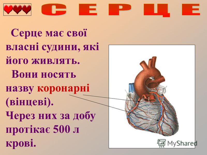 Серце має свої власні судини, які його живлять. Вони носять назву коронарні (вінцеві). Через них за добу протікає 500 л крові.