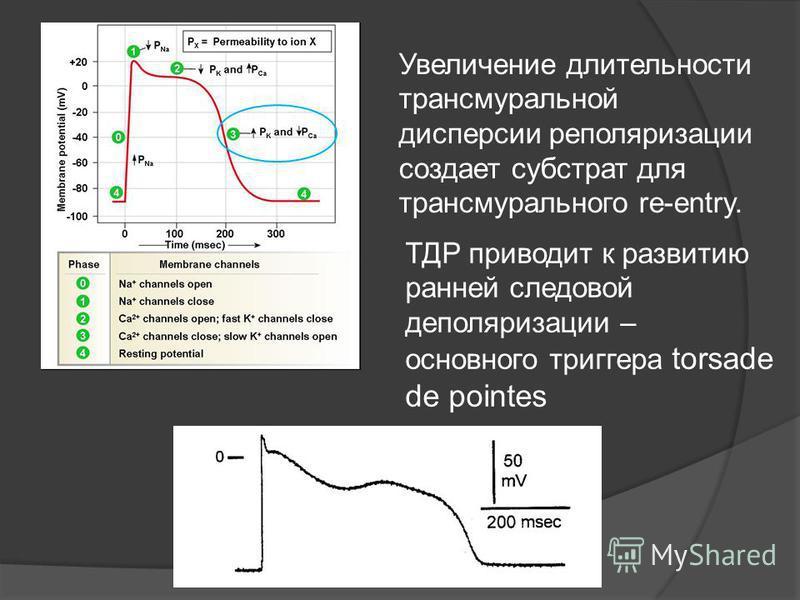 Увеличение длительности трансмуральной дисперсии реполяризации создает субстрат для трансмурального re-entry. ТДР приводит к развитию ранней следовой деполяризации – основного триггера torsade de pointes