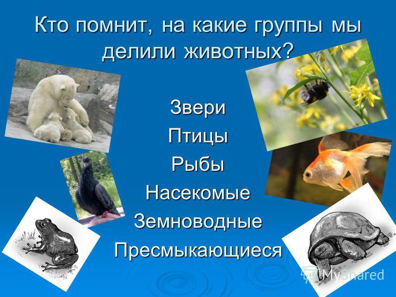 Кто помнит, на какие группы мы делили животных? Звери Птицы Рыбы Насекомые Земноводные Пресмыкающиеся
