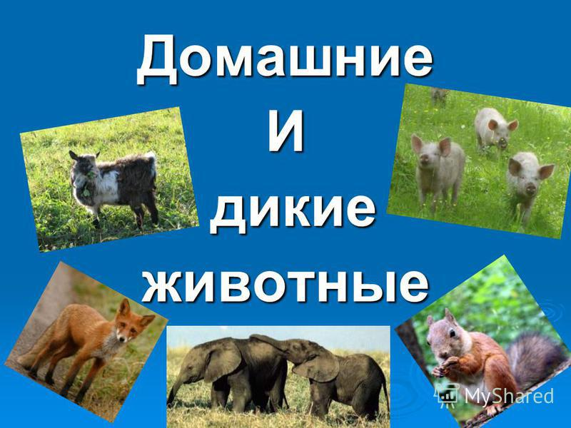 ДомашниеИ дикие дикие животные