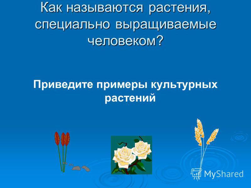 Как называются растения, специально выращиваемые человеком? Приведите примеры культурных растений