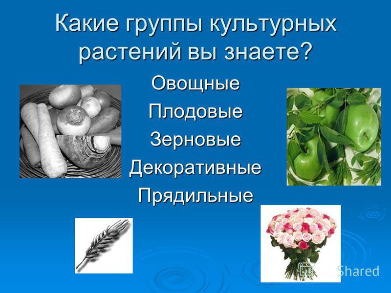 Какие группы культурных растений вы знаете? Овощные Плодовые Зерновые Декоративные Прядильные
