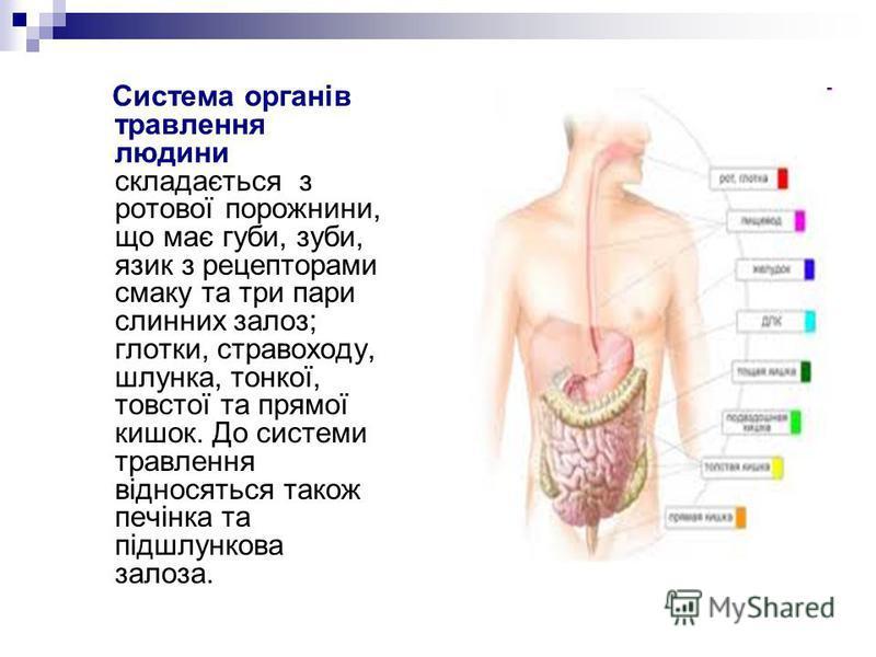 Система органів травлення людини складається з ротової порожнини, що має губи, зуби, язик з рецепторами смаку та три пари слинних залоз; глотки, стравоходу, шлунка, тонкої, товстої та прямої кишок. До системи травлення відносяться також печінка та пі