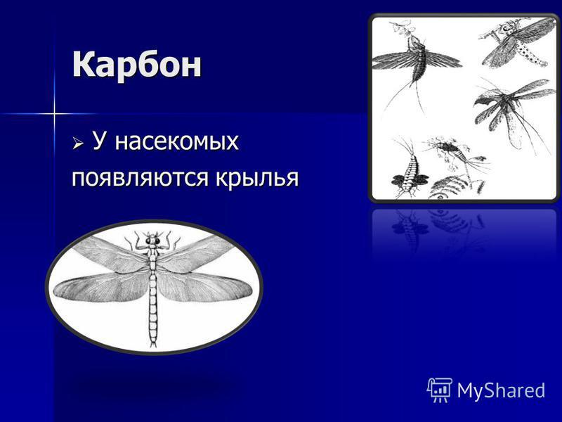 Карбон У насекомых У насекомых появляются крылья