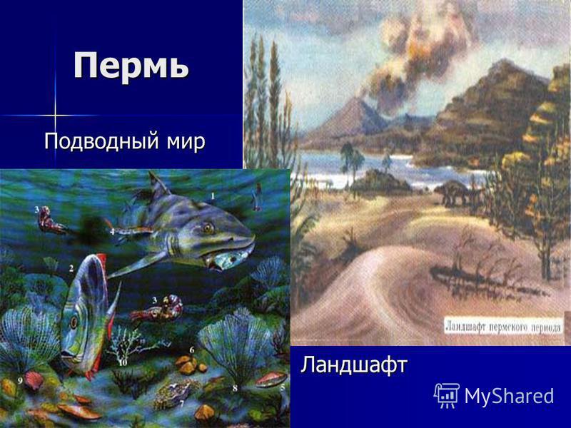 Пермь Подводный мир Ландшафт Ландшафт
