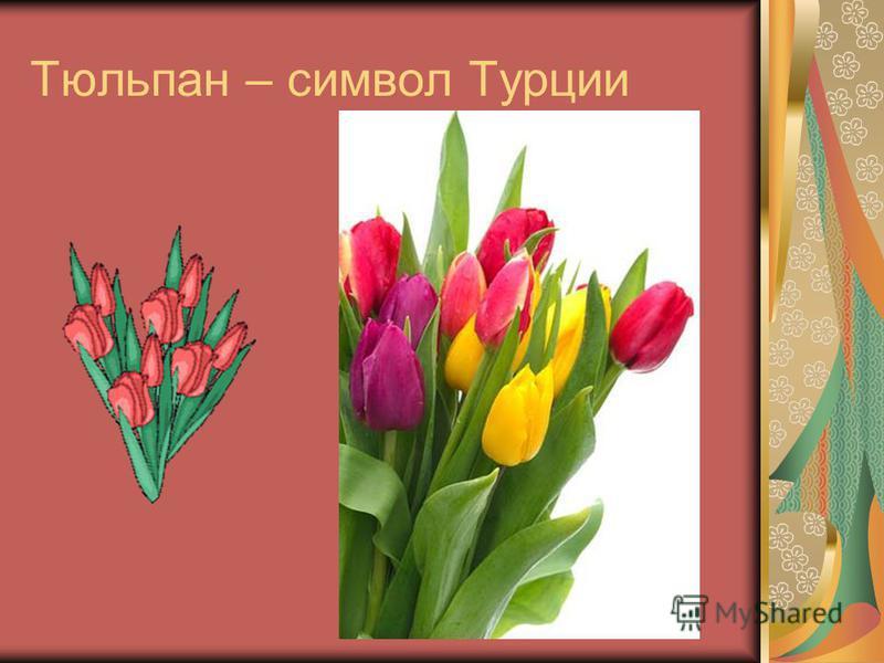 Тюльпан – символ Турции