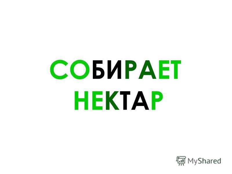 СОБИРАЕТ НЕКТАР
