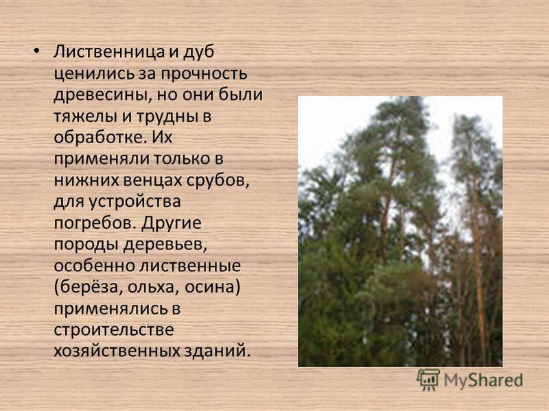 Лиственница и дуб ценились за прочность древесины, но они были тяжелы и трудны в обработке. Их применяли только в нижних венцах срубов, для устройства погребов. Другие породы деревьев, особенно лиственные (берёза, ольха, осина) применялись в строител