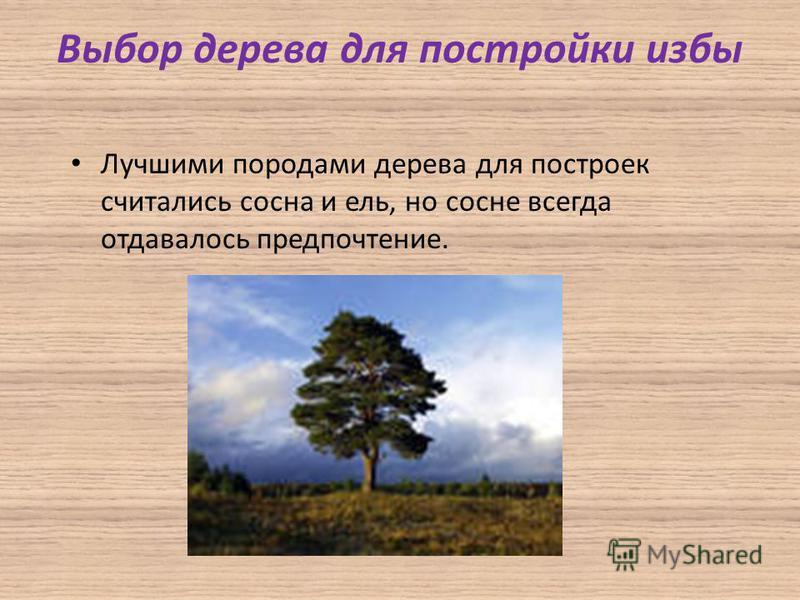 Выбор дерева для постройки избы Лучшими породами дерева для построек считались сосна и ель, но сосне всегда отдавалось предпочтение.