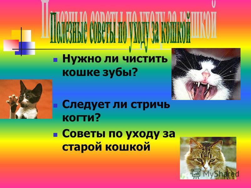 Нужно ли чистить кошке зубы? Следует ли стричь когти? Советы по уходу за старой кошкой