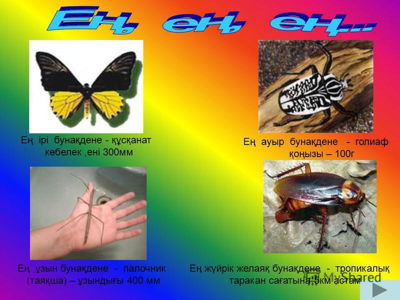 Ең ірі бунақдене - құсқанат көбелек,ені 300мм Ең ауыр бунақдене - голиаф қоңызы – 100г Ең ұзын бунақдене - палочник (таяқша) – ұзындығы 400 мм Ең жүйрік желаяқ бунақдене - тропикалық таракан сағатына 5км астам