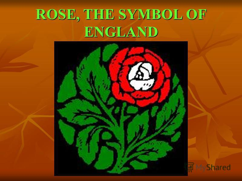 ROSE, THE SYMBOL OF ENGLAND